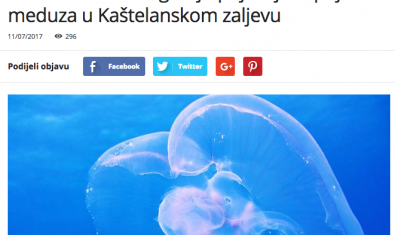 The Institute of Oceanography clarifies the appearance of jellyfish in the Kaštela Gulf